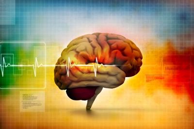 glycine_brain